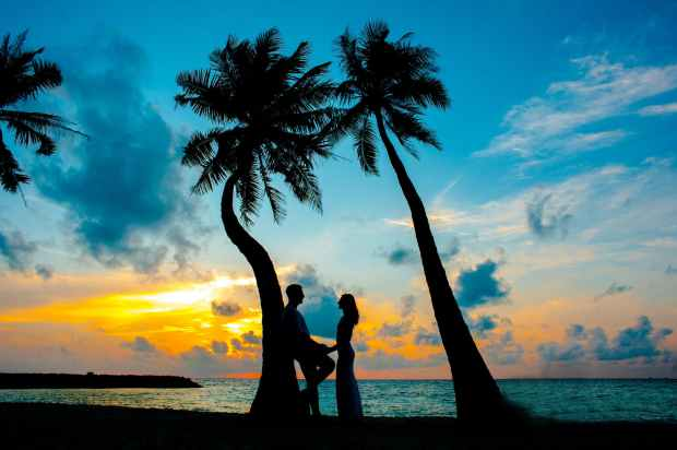 silhouette photo of male and female under palm trees